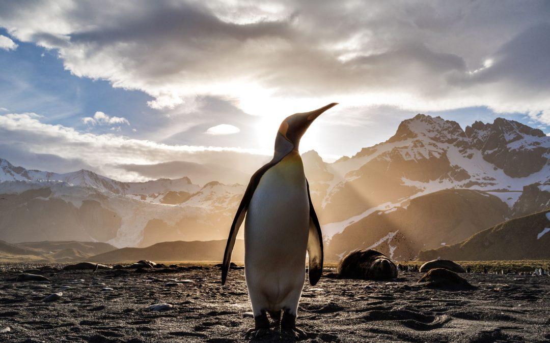 Πως είναι να χρησιμοποιείς Linux, τον άγνωστο ανταγωνιστή των Windows και macOS